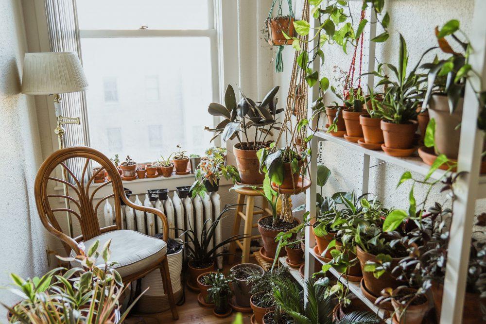 Houseplants in small Fargo apartment.